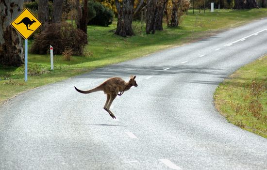 حيوانات تعبر الشوارع ......صور جميلة